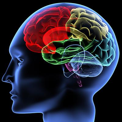1345117200_Brain-5